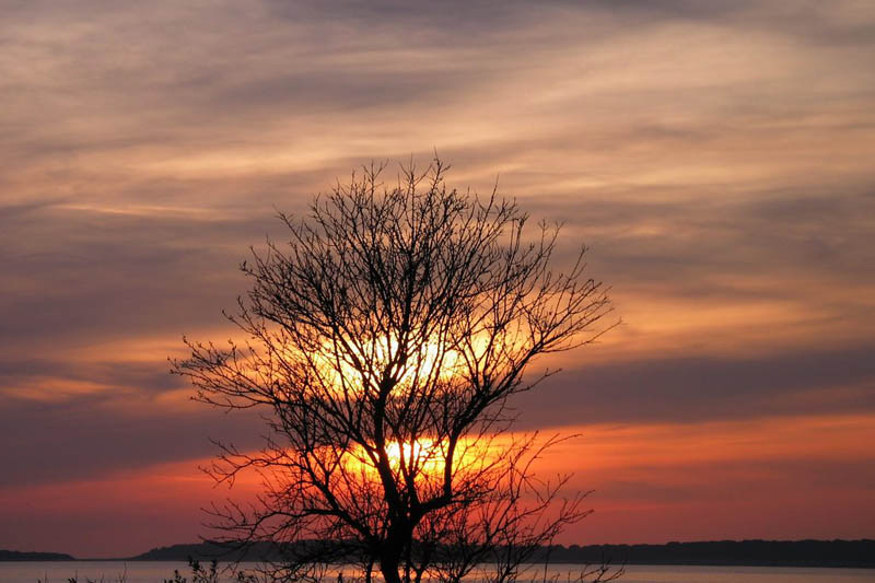 03-03-17-drvo-s-puntizele-s.jpg